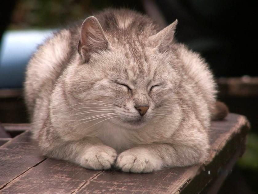 1.kot z babiej góry