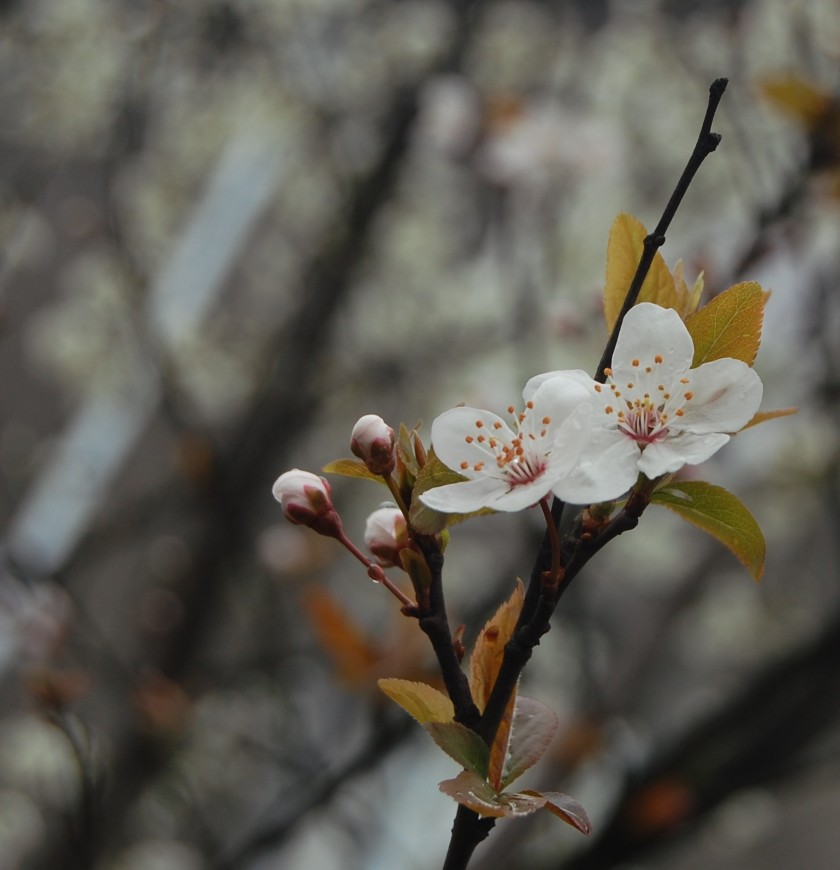 wiosna3